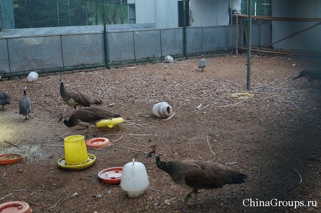 минизоопарк на территории института Циньдао