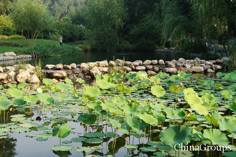 Лотосовое озеро на территории ХИУ