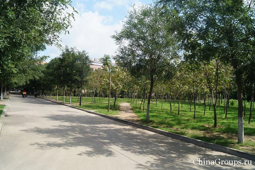 Зеленая территория университета Бохай