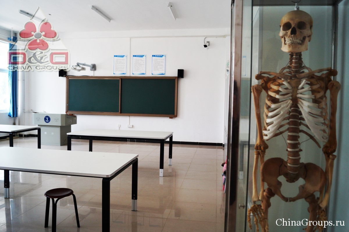 Институт Тунжень учебные классы скелеты человека